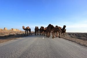 Top 8 Things to do in Turkmenistan