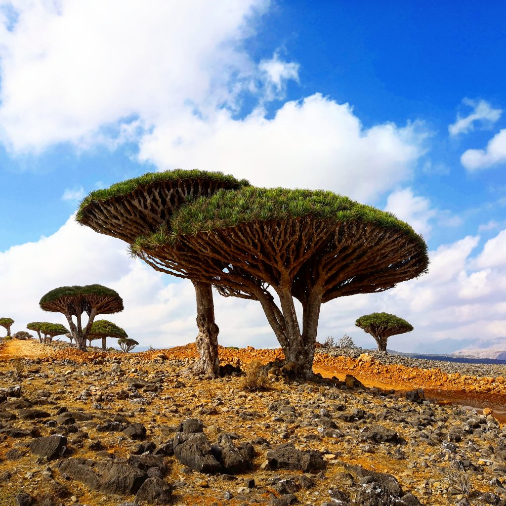 Seen on a Socotra tour