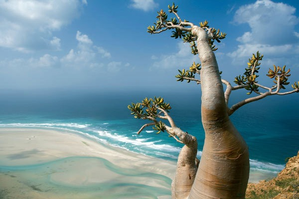 Travel to Socotra Island with Rocky Road Travel