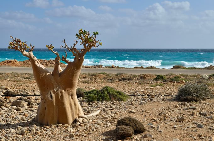 Is Socotra Safe?