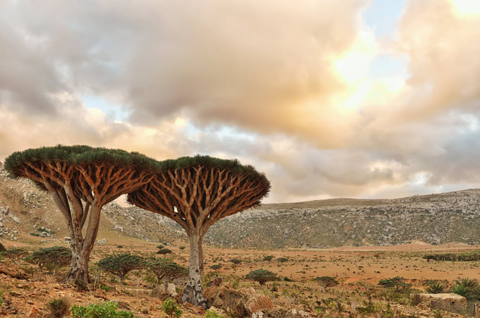 See incredible scenery on our Socotra tours
