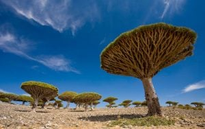 Travel to Socotra