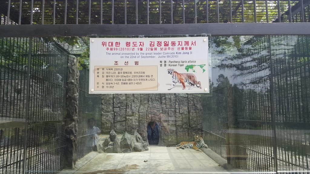 Pyongyang zoo tiger donated by Kim Jong Il