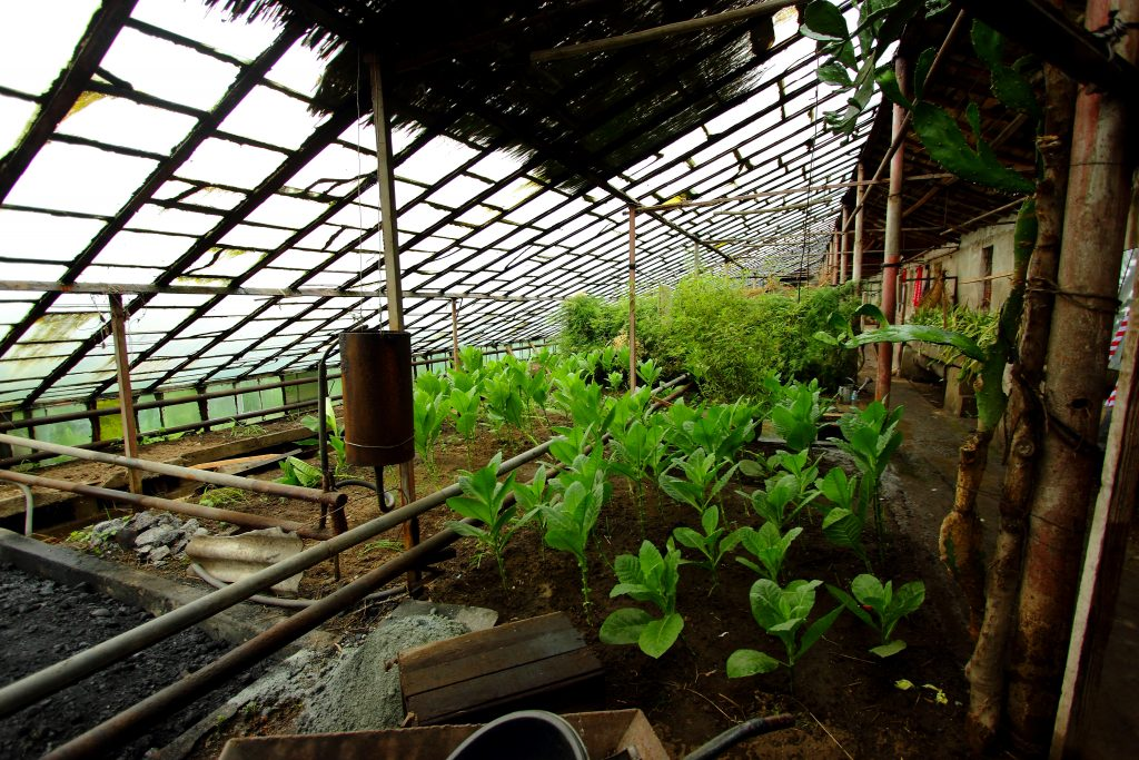 Greenhouse on an agriculture in North Korea tour