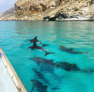 Read more about the article Things To Do On Socotra Island